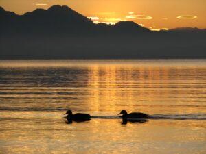 Entenpaar Chiemsee Bild Himmel Fönlinsen