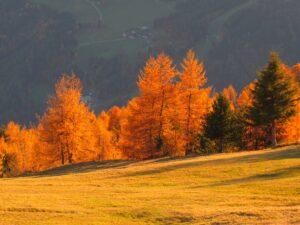 Hike&Fly goldener Herbst Gleitschirmfliegen