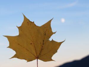 Herbststimmung beim Wandern im Gleitschirmfluggebiet