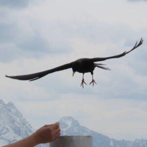 Gleitschirmfliegen Paragliding Vogel Adler